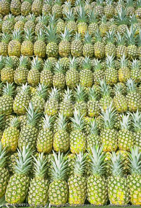 Harvested organic pineapples, Sarapiqui, Costa Rica, Central America