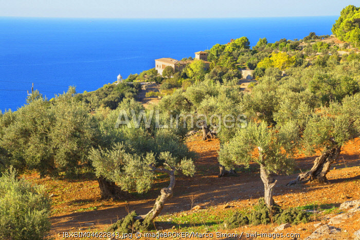 Olive trees surrounding Son Marroig Mansion, Deia, Mallorca, Balearic Islands, Spain, Europe