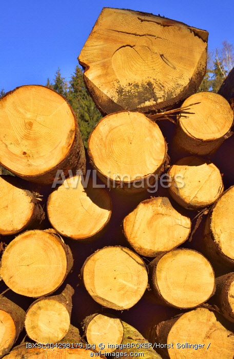 Stacked logs, Spruce (Picea abies), pine (Piunus sylvestris) and Weymouth pines (Pinuns strobus), Bavaria, Germany, Europe