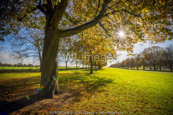 UK, England, Berkshire, Windsor, Windsor Castle, The Long Walk