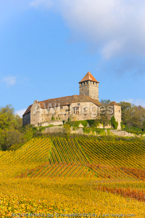Castle Lichtenberg, Vineyards, Autumn Landscape, Oberstenfeld, Baden-Wurttemberg, Germany, Europe