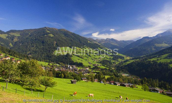 Pasture, cows, Kitzbuhel Alps, Alpbach valley, Alpbach, Tyrol, Austria, Europe