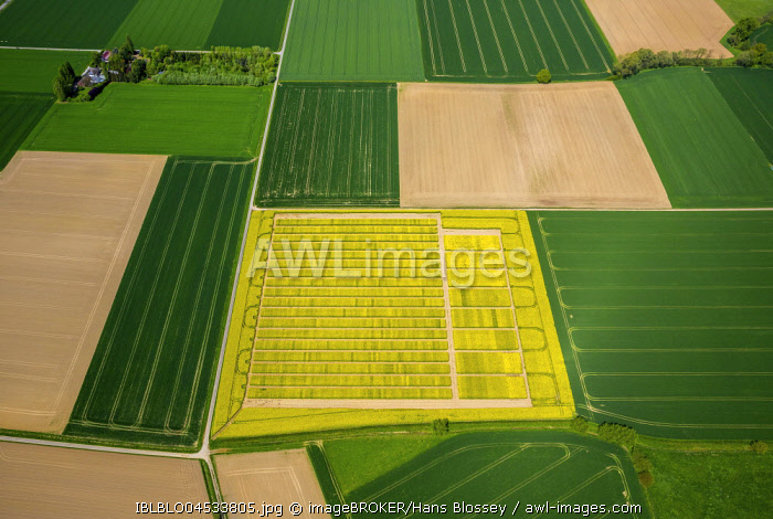 Rape field with divisions for test sowing, agriculture, agriculture field, agriculture test field, seed optimization, yellow rape field in green farmland, aerial photo, Soest, Soesterborde, North Rhine-Westphalia, Germany, Europe