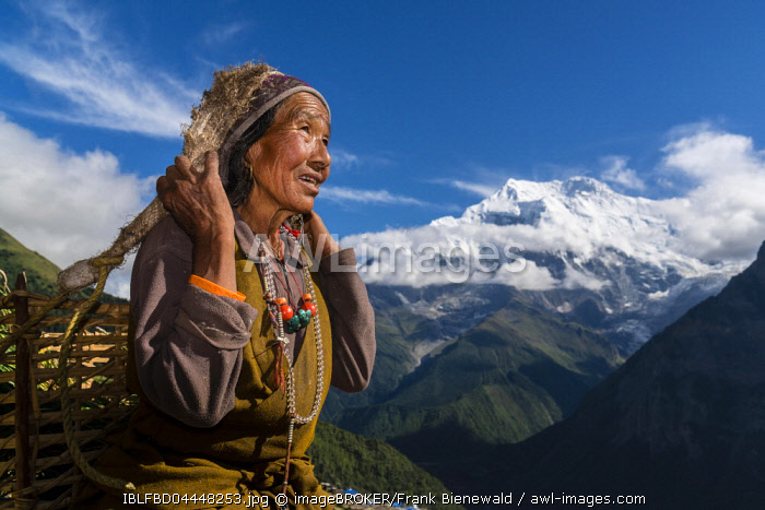 Female farmer carrying basket with harvested crops with Mount Annapurna II in the distance, Ghyaru, Manang District, Nepal, Asia