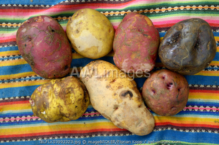 Different Potato varieties (Solanum tuberosum), traditional Andean produce, Chuquis, Huanuco Province, Peru, South America *** IMPORTANT: No disclosure by charities ***