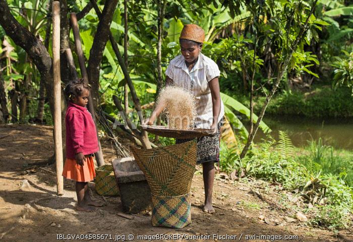 Woman cleaning the grain, winnowing rice grains, ethnic group of Betsimisaraka, Ambavaniasy, Madagascar, Africa
