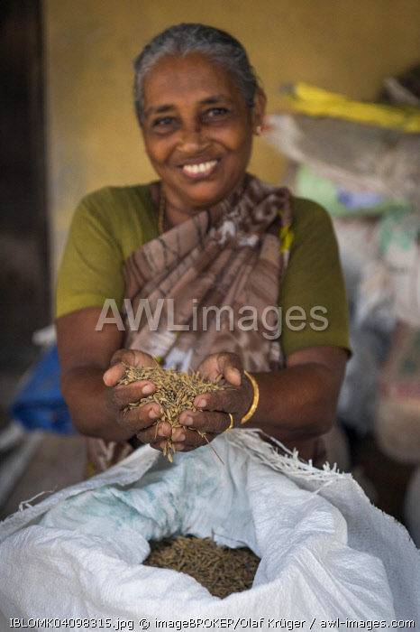 Woman holding Pokkali rice in her hands, backwaters, Ernakulam District, Kerala, India, Asia