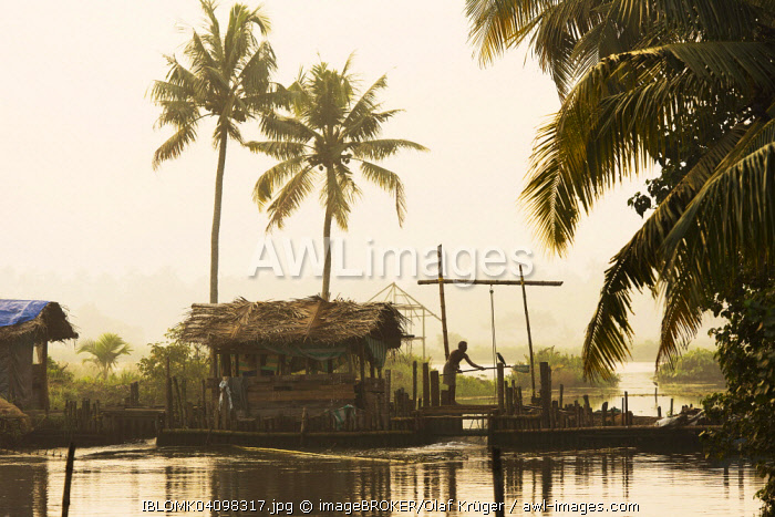 Man on wooden sluice to regulate the water level of the Pokkali rice fields during ebb and flood, backwaters, Ernakulam District, Kerala, India, Asia