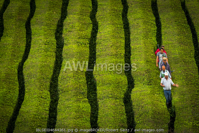 Workers at Cha� Gorreana tea plantation, near Sao Bra�s de Alportel, Sao Miguel, Azores, Portugal, Europe