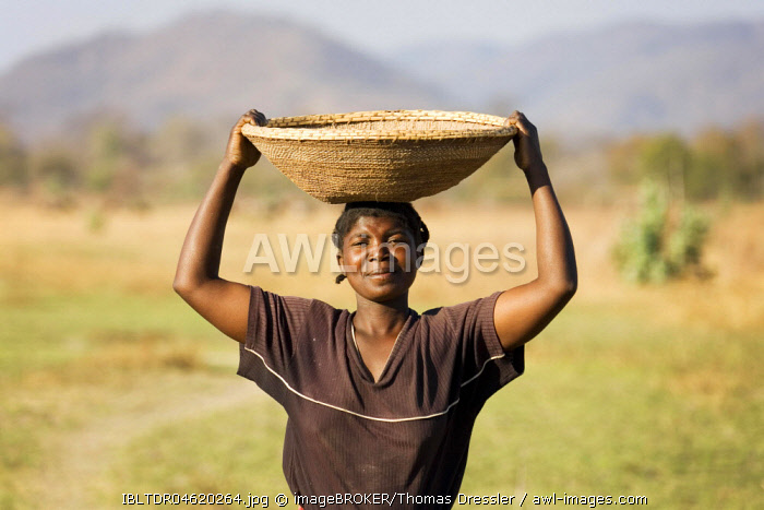Tonga woman carries a basket with millet to her village at the Lake Kariba, Zambia, Africa