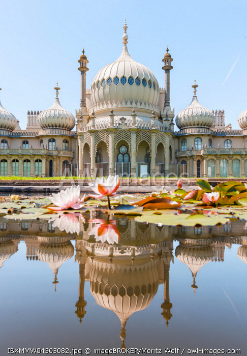Water lilies in a pond in front of Royal Pavilion Palace, Mirroring, Brighton, East Sussex, England, Great Britain