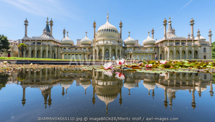 Water lilies in a pond in front of Royal Pavilion Palace, Brighton, East Sussex, England, Great Britain