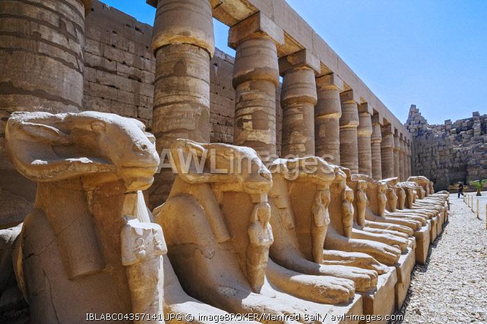 Avenue of ram-headed sphinxes at Karnak Temple, Karnak, Luxor, Egypt, Africa
