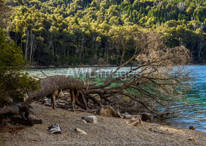 Munoz Beach, Gutierrez Lake, Nahuel Huapi National Park, Rio Negro Province, Argentina