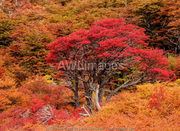 Autumn in Los Glaciares National Park, Santa Cruz Province, Patagonia, Argentina