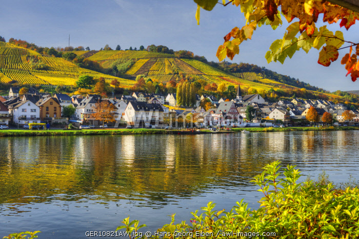 River Mosel with Zell-Kaimt, Rhineland-Palatinate, Germany