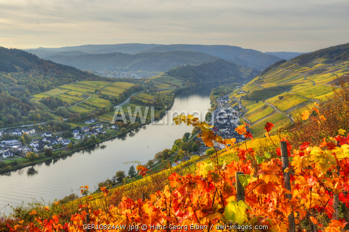 River Mosel with Zell-Merl at fall, Rhineland-Palatinate, Germany