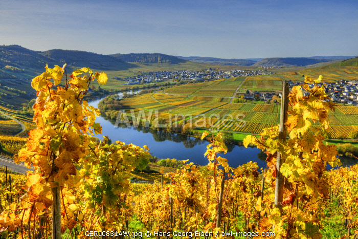 View at Trittenheim and Leiwen with river Mosel at fall, Rhineland-Palatine, Germany