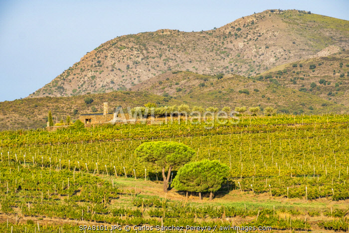 awl-images.com - Spain / Vineyards of the Martin Faixo winery in the nature reserve of Cap de Creus in the north of the Costa Brava in the province of Girona in Catalonia Spain