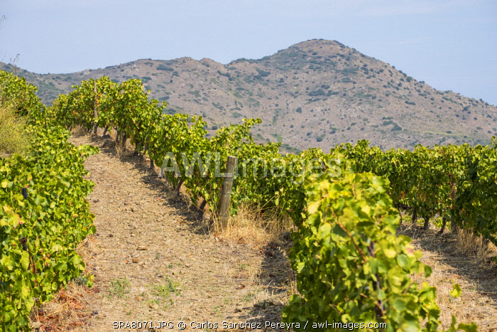 awl-images.com - Spain / Landscape with vineyards in the l'Emporda region north of the Costa Brava in Catalonia Spain