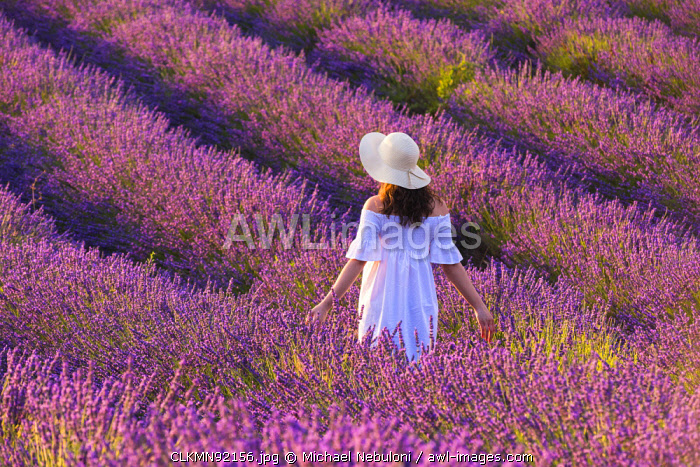 Valensole, Provence, France. Woman stading in lavender field (MR)