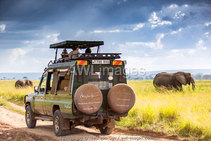 awl-images.com - Tanzania / Pioneer Camp, Serengeti, Tanzania, Elewana Collection, a small herd of elephant make their way across the plains while tourists in a safari vehicle look on.