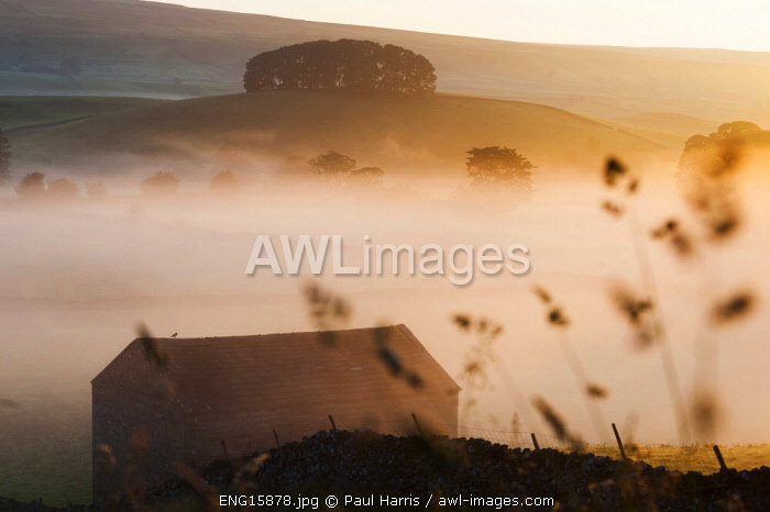 awl-images.com - England / England, Yorkshire Dales, Wensleydale, Sunrise over fields and barns
