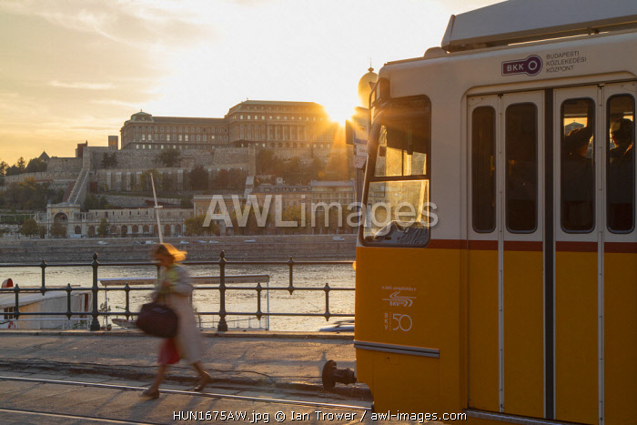 Tram on Danube Promenade with Buda Castle in background, Budapest, Hungary