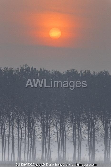 Plain Piedmont,Turin district, Piedmont, Italy.Sunrise trees in the Piedmont plain