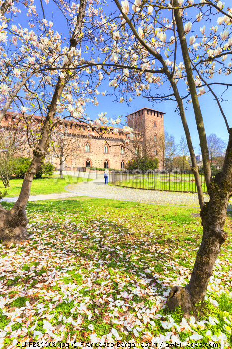 Flowering in the park of Castello Visconteo(Visconti Castle).  Pavia, Pavia province, Lombardy, Italy, Europe.