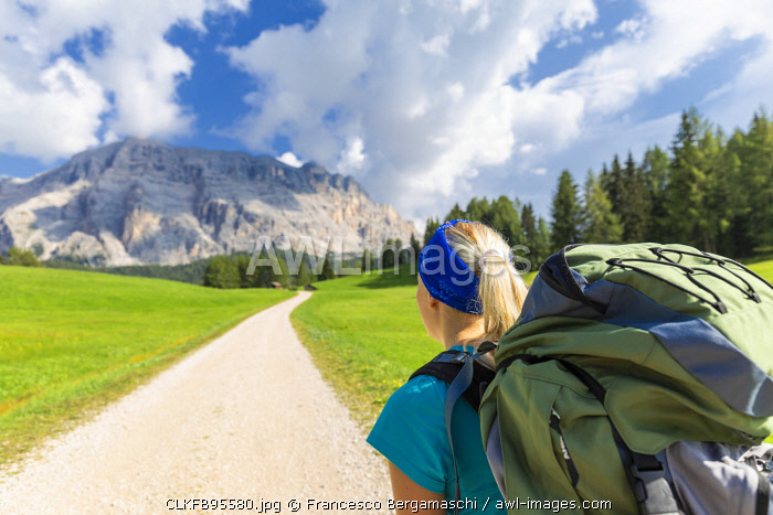 Hiker looks track with Sasso della Croce in the background. La Valle/La Val/Wengen Badia Valley, South Tyrol, Dolomites, Italy, Europe. (MR)