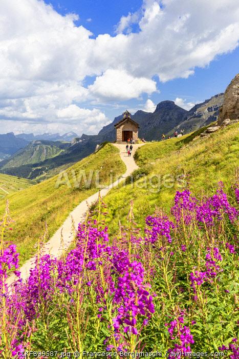 Flowering at Pordoi Pass Chapel. Pordoi Pass, Fassa Valley, Trentino, Dolomites, Italy, Europe.
