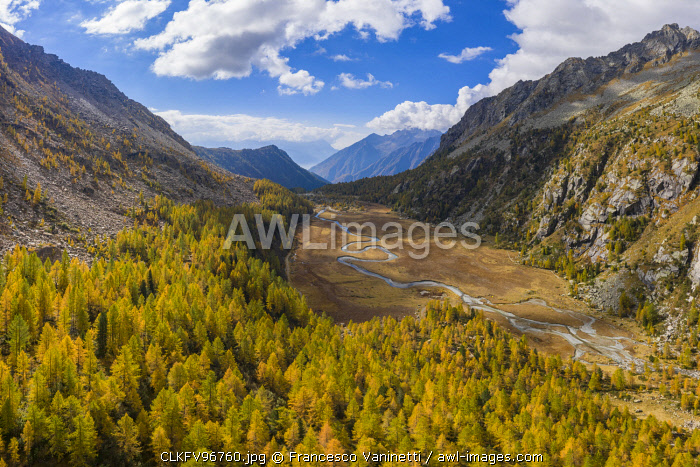 Aerial view of the winding Duino river and the larches in autumn in Preda Rossa valley. Val Masino, Sondrio province, Lombardy, Italy.