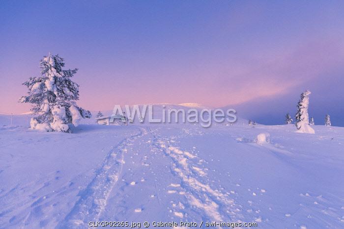 Frozen tree and log cabin at Pallas-Yllastunturi National Park, Muonio, Lapland, Finland