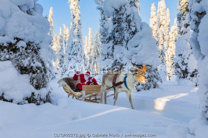 Santa Claus on the sleigh with reindeer, Ruka, Kuusamo, Northern Ostrobothnia region, Lapland, Finland (MR)