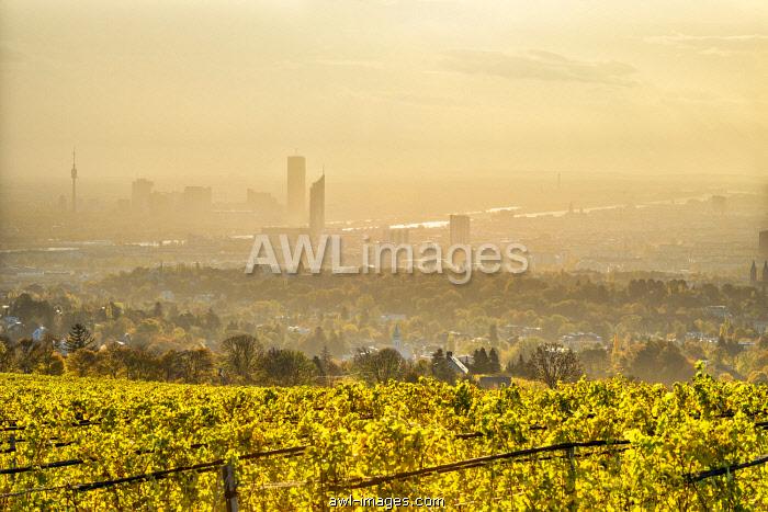 Grinzing, Vienna, Austria, Europe. View at sunrise from the vineyards around Grinzing to Vienna