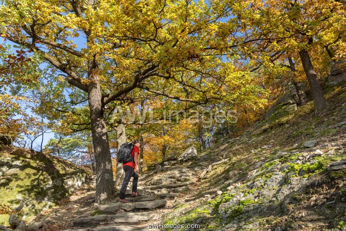Duernstein, Wachau, Waldviertel, district of Krems, Lower Austria, Austria, Europe.  A hiker on the Wachau World Heritage Trail near Duernstein (MR)