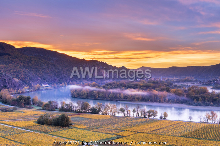 Weissenkirchen in der Wachau, Wachau, Waldviertel, district of Krems, Lower Austria, Austria, Europe. Sunrise in the vineyards near Weissenkirchen in der Wachau, view to the Danube river and the villages of Dürnstein