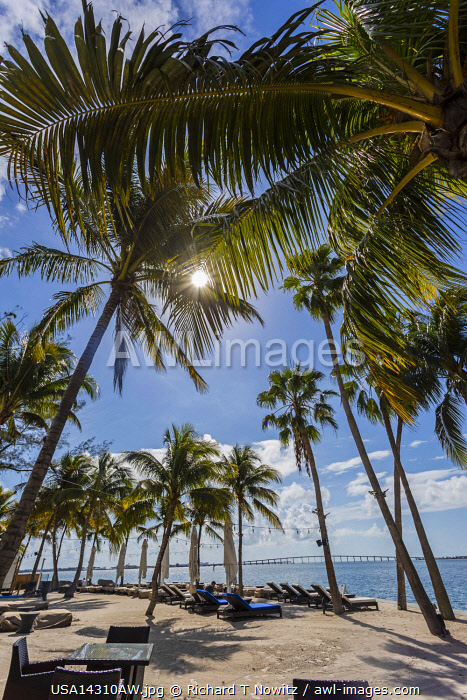 Usa, Miami, Florida. The Mandarin Oriental Hotel's white sand beach with palm trees.