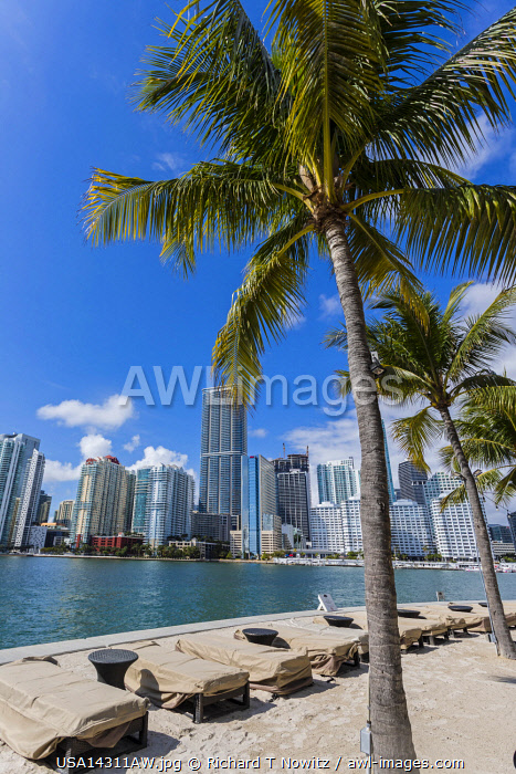 USA, Miami, Florida. The Mandarin Oriental Hotel's white sand beach with palm trees.