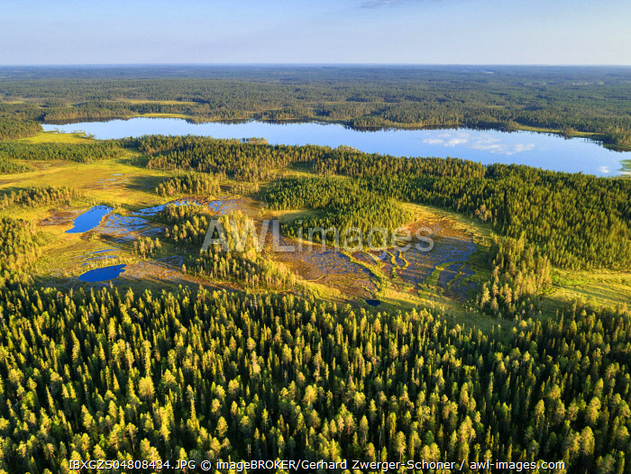 Drone shot, conifers in wetland with lake, boreal, arctic forest, Suomussalmi, Kainuu, Finland, Europe