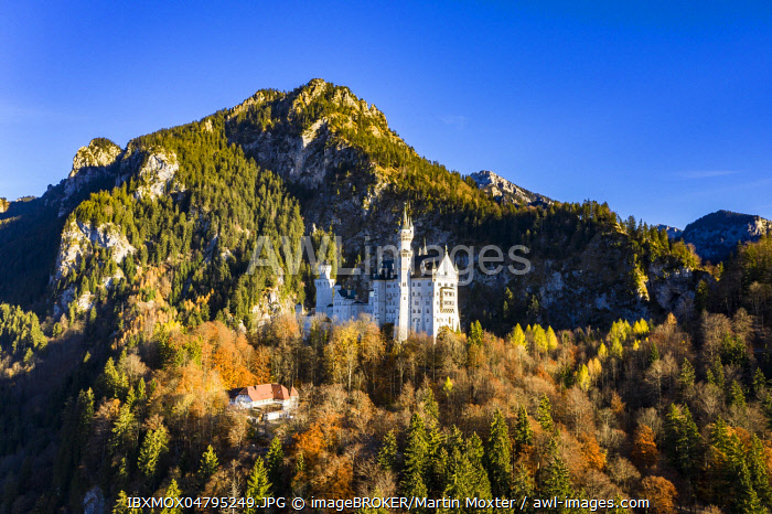 Drone shot, Neuschwanstein Castle in autumn, Schwangau, Ostallgau, Allgau, Swabia, Upper Bavaria, Germany, Europe