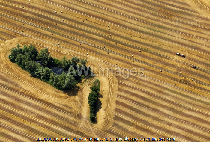 Aerial view, harvested corn field with forest patches, tractor collecting straw bales, moraine, Gülzow-Prüzen, Mecklenburg-Western Pomerania, Germany, Europe