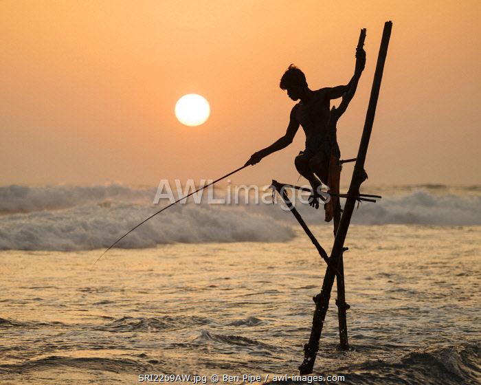 Stilt Fishermen at dusk, Weligama, South Coast, Sri Lanka, Asia
