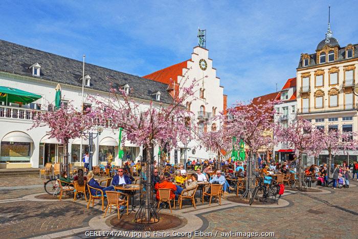 Rathausplatz with flourishing almond trees at Landau, Rhineland-Palatinate, Germany