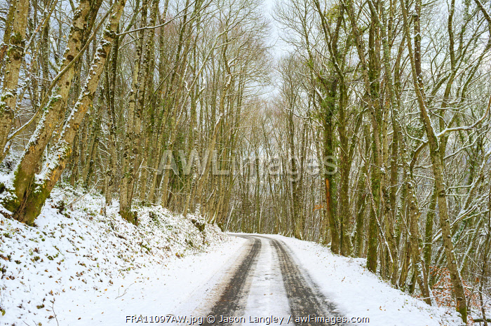 A small road through snow-covered forest in winter, La Creuse, Limousin, France.