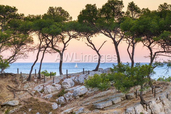 Sailboat passing Mediterranean landscape at Calanque de Sugiton at sunset, Parc National des Calanques, Provence-Alpes-Côte d'Azur, Bouches-du-Rhône, France