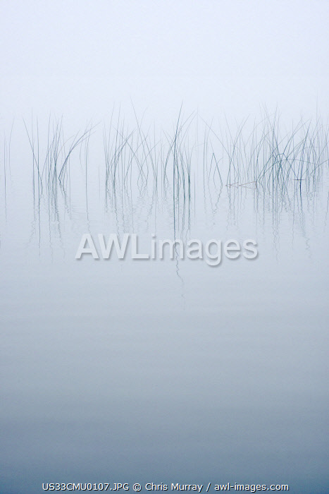 USA, New York State. Reeds in the mist.