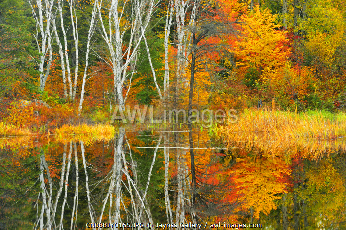 awl-images.com - Canada / Canada, Ontario, Capreol. Trees reflected in Vermilion River in autumn
