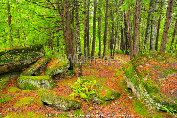 awl-images.com - Canada / Canada, Quebec, Val-Jalbert. Forest and moss-covered rocks